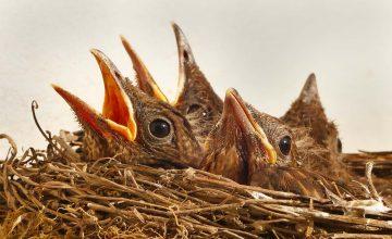 ptaki-zawsze-chcą-więcej