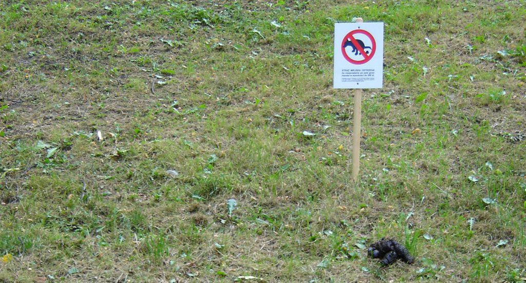 Psie odchody na trawniku